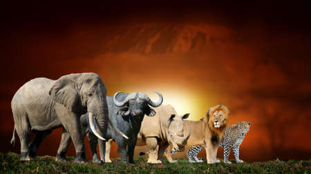 Close big five on savanna landscape background and Mount Kilimanjaro at sunset