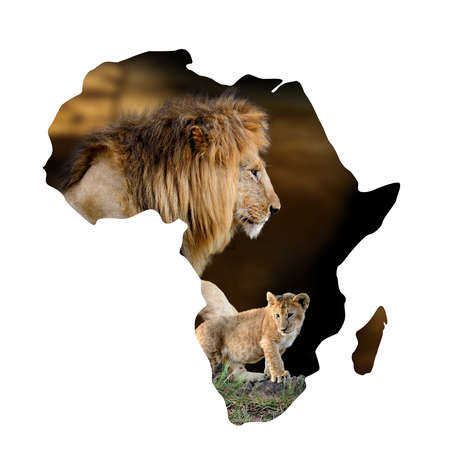 Male lion and cub portrait in Africa map isolated on white background