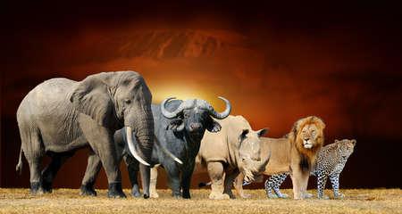 Schließen Sie Big Five auf Savannenlandschaftshintergrund und den Kilimanjaro bei Sonnenuntergang