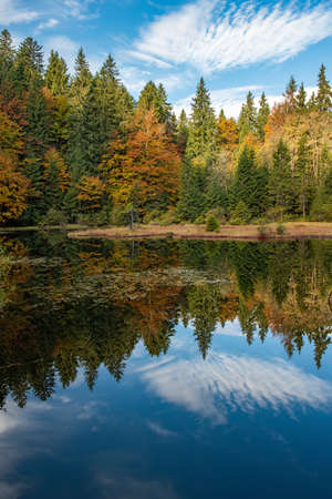 Forest lake in autumn colorful foliage. Water and forest in fall season