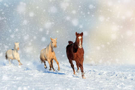 Horse in a snow on Christmas background. Winter wonderland. New Year card.  Stock fotó