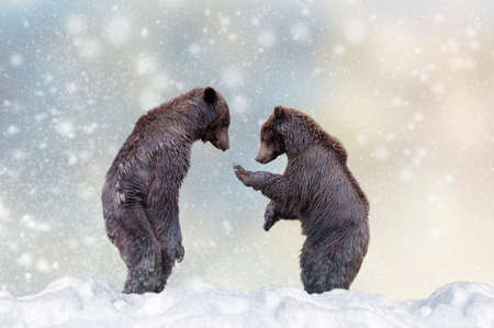 Bear in a snow on Christmas background. Winter wonderland. New Year card.  Stock fotó