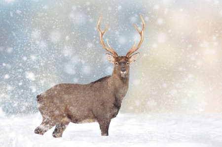 Deer in a snow on Christmas background. Winter wonderland. New Year card.