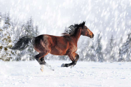 Horse in a snow on winter background. New Year card.  Standard-Bild