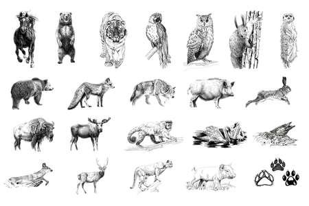 Set of many animals and foot prints, hand drawn illustrations (originals, no tracing) Foto de archivo - 136527008