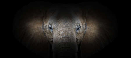 Elephant portrait on a black background. View from the darkness Foto de archivo - 136527077