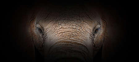 Elephant portrait on a black background. View from the darkness Foto de archivo - 136527109