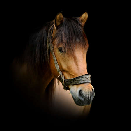 Close up horse portrait isolated on dark background Foto de archivo - 137754941