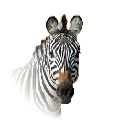 Close up ANIMAL portrait isolated on white background Foto de archivo - 137571167