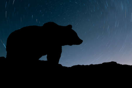 Silhouette bear and night sky with star