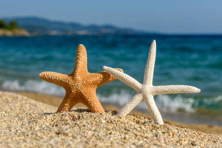 Starfish seashells on the sand by the sea on a hot sunny day