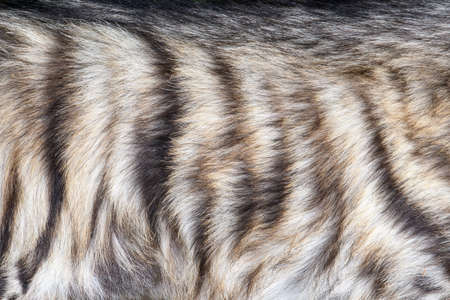 Closeup real hyena skin texture. Fur background texture image background Stock Photo
