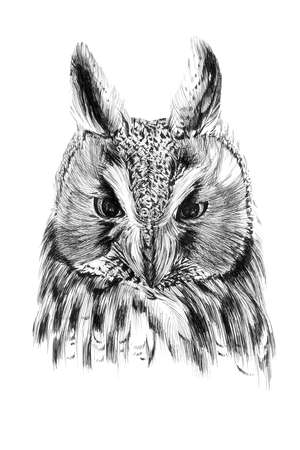 Hand drawn owl portrait, sketch graphics monochrome illustration on white background (originals, no tracing)