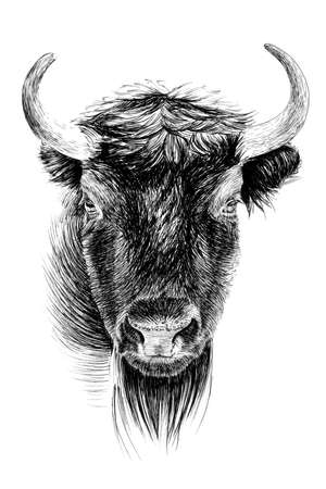 Hand drawn bison portrait, sketch graphics monochrome illustration on white background (originals, no tracing)