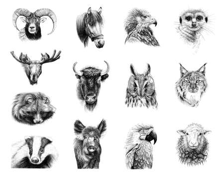 Hand drawn portraits of thirteen animals, sketch graphics monochrome illustration on white background (originals, no tracing)