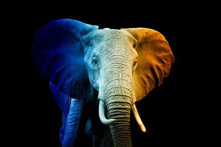 Close up portrait of elephant in a hot and cold shade Archivio Fotografico
