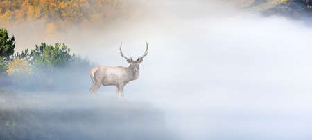 Close up deer on mountain background with fog in autumn time Banque d'images