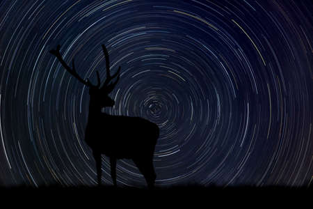 Silhouette of old deer with big horn at night with startrail in the background Foto de archivo