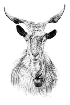 Hand drawn goat portrait, sketch graphics monochrome illustration on white background (originals, no tracing) Foto de archivo