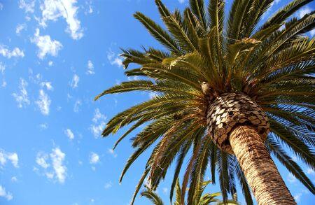palm tree Banco de Imagens - 560403
