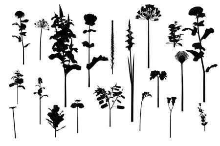 3d render of flowers
