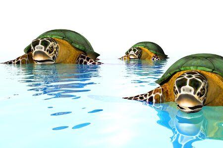 3d reder of a sea turtle Reklamní fotografie