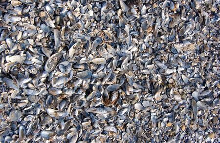 껍질 덮인 해변 스톡 콘텐츠