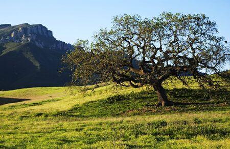 boney mountain in point mugu state park in the santa monica Mountain, in california.usa
