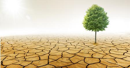 Tree in Dry  Desert