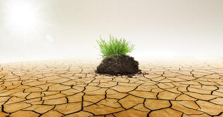 Green Grass in Dry desert