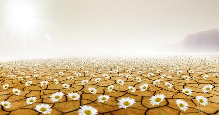Daisys in Desert Banco de Imagens