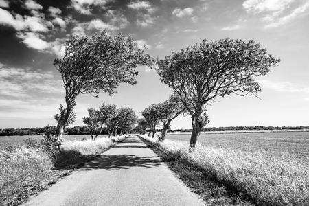 Road with Trees 版權商用圖片 - 117490866