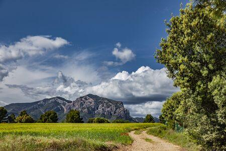 Country Road in summer landscape in fields