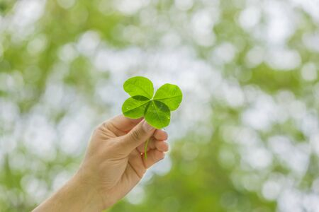 Four-leaf clover in hand background Stok Fotoğraf