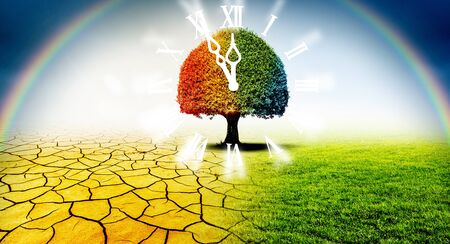 Colorful tree in a desert and a green meadow in climate change with leven fifty-five clock