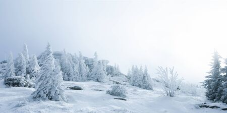 Enchanting winter landscape with snowy fir trees