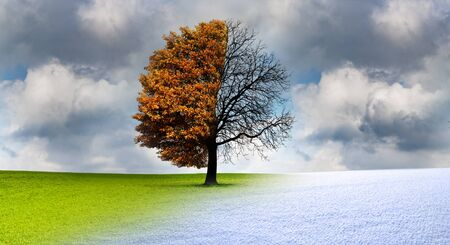 Tree in the change of the seasons