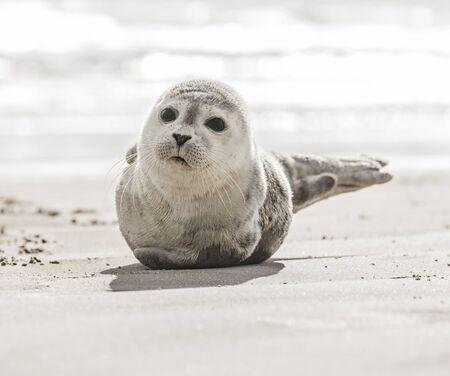 Little seal on the beach