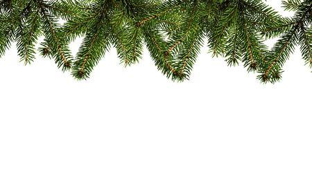 Evergreen Christmas fir branch