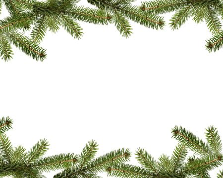 Branche de sapin de Noël à feuilles persistantes