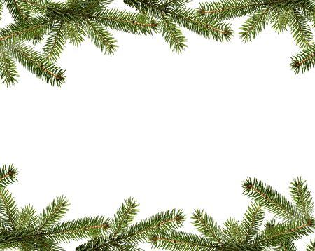 Rama de abeto de Navidad de hoja perenne