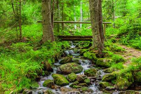 Torrent in the Bavarian Forest