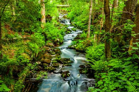 Wild river in a green forest Reklamní fotografie