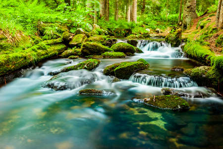 Wild river in a green forest