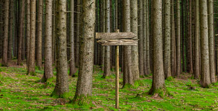 Old wooden sign in the forest