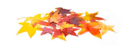 Colorful marple leaves