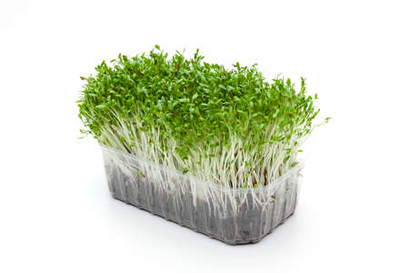 Green garden cress isolated on white