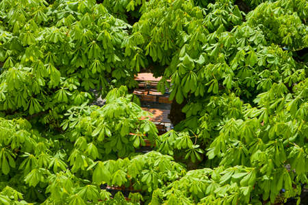 Beer tables under green chestnut trees seen from above