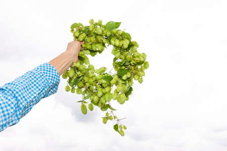 Hop wreath in a hand against a light background Zdjęcie Seryjne