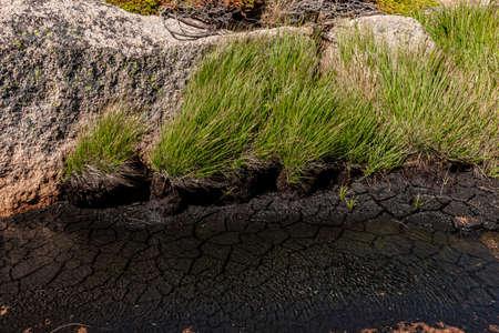 Dry soil in a bog lake Фото со стока